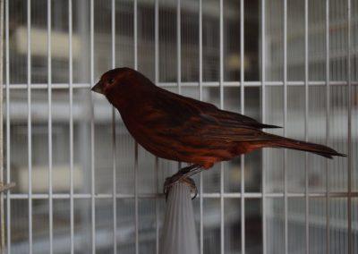 pierino bernasconi nero rosso